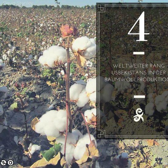 Rang Usbekistan Baumwolle Ernte Fact