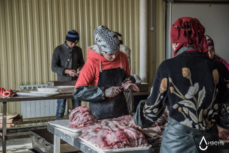 Verarbeitung des Fischfangs am kleinen Aralsee