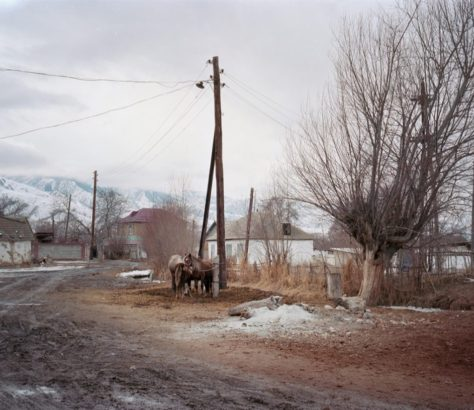 Pferde in Karakol Kirgistan Isikkölsee