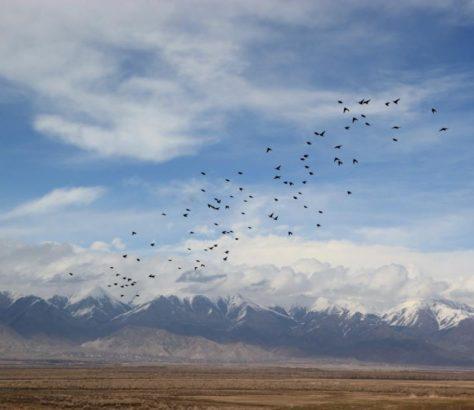 Issikkölsee Kirgistan Vögel