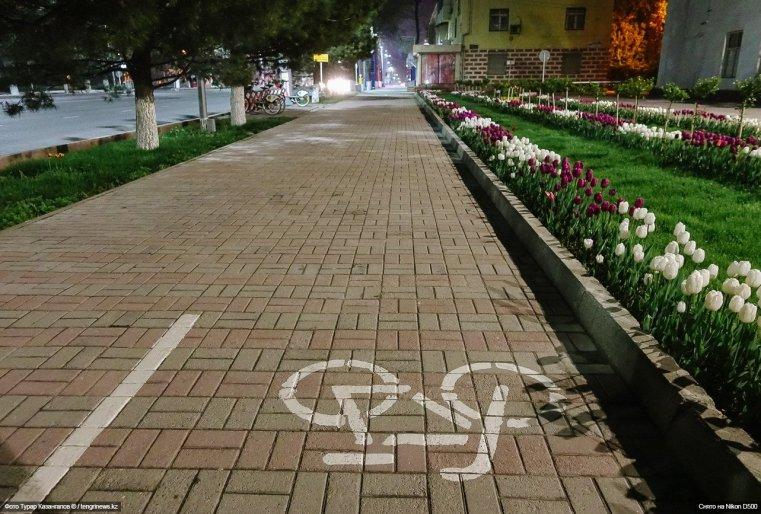 Tulpen Schymkent Blumen