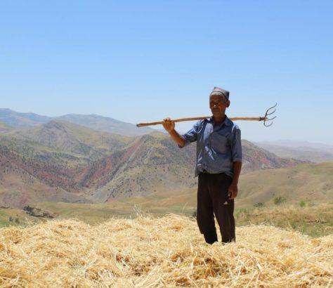 Landwirtschaft Usbekistan Shahrisabz Ernte