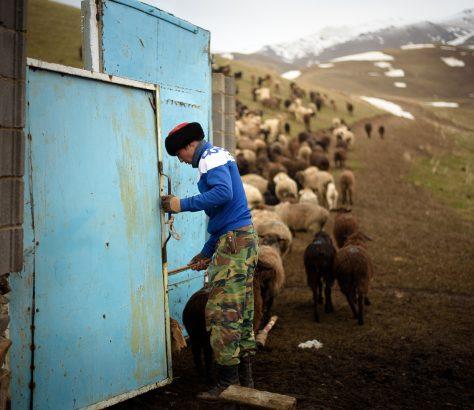 Dastan arbeitet früh morgens in seinem Hof in Kilemche Kirgistan