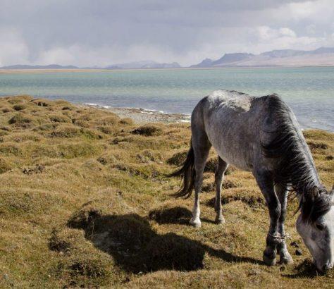 Pferd Kirgistan Nomaden Nomadentum Bergen Songköl See