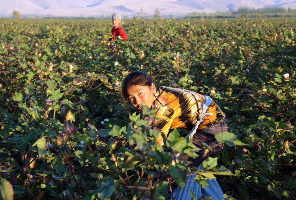 Baumwollernte Kirgistan Kinderarbeit