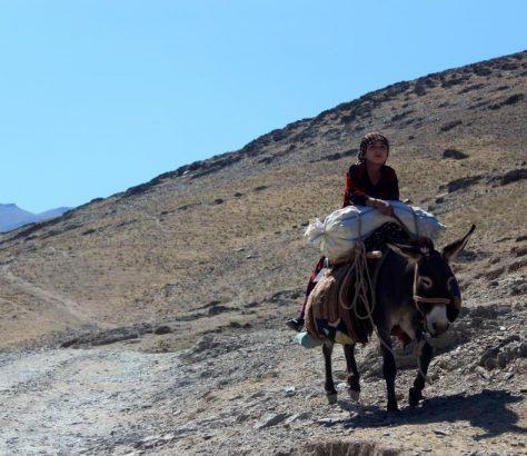 Esel Transport Usbekistan Dorf