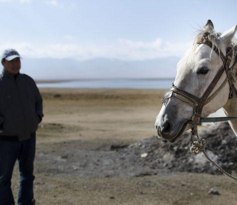 Kirgistan Pferd Novokirgis Songkölsee