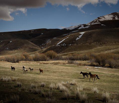 Pferde im kirgisischen Gebirge