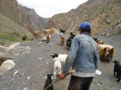 Zentralasien, Tadschikistan, Hirte, Schafe, Weide