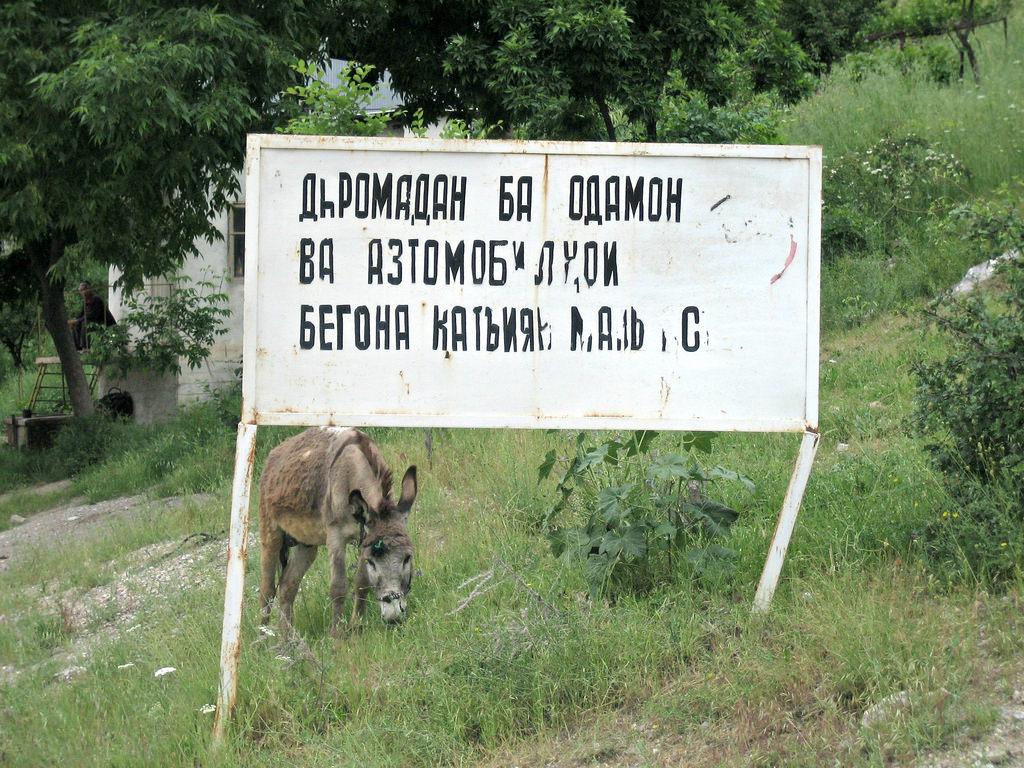 Tadschikistan, Tadschikisch, Esel