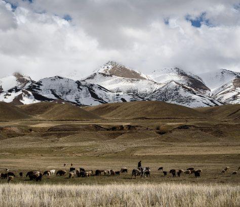 Mai in den Bergen in Kirgistan