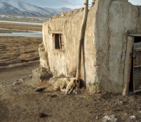 Pamir Hund Hütte Tadschikistan