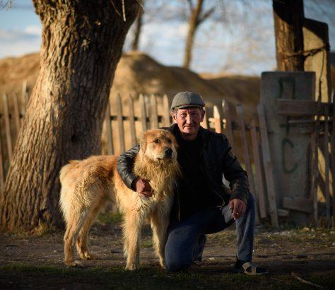 Kyzyl-Tuu Kirgistan Issikköl Porträt Hund
