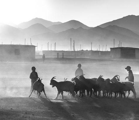Rangkul Kirgistan Viehzucht