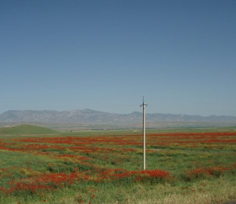 Tadschikistan Danghara Mohn