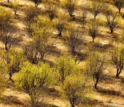 Mandelgarten Chimgon Usbekistan Bild des Tages