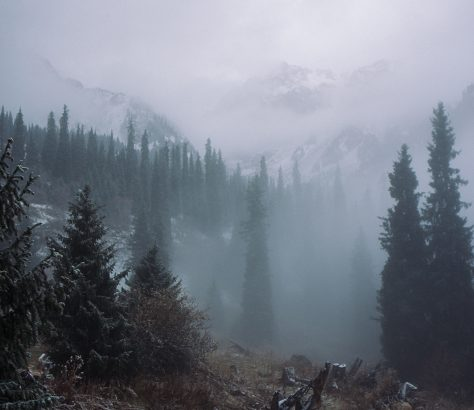 Kasachstan Gebirge Almaty Bäume