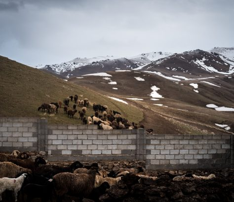Kirgistan Viehzucht Gebirge