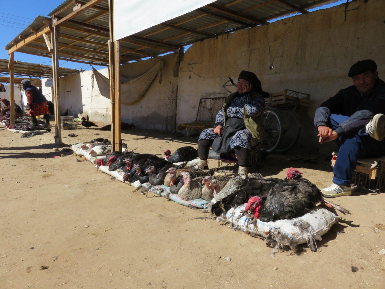 Truthahn Karakalpakistan Markt Nukus Usbekistan Bild des tages