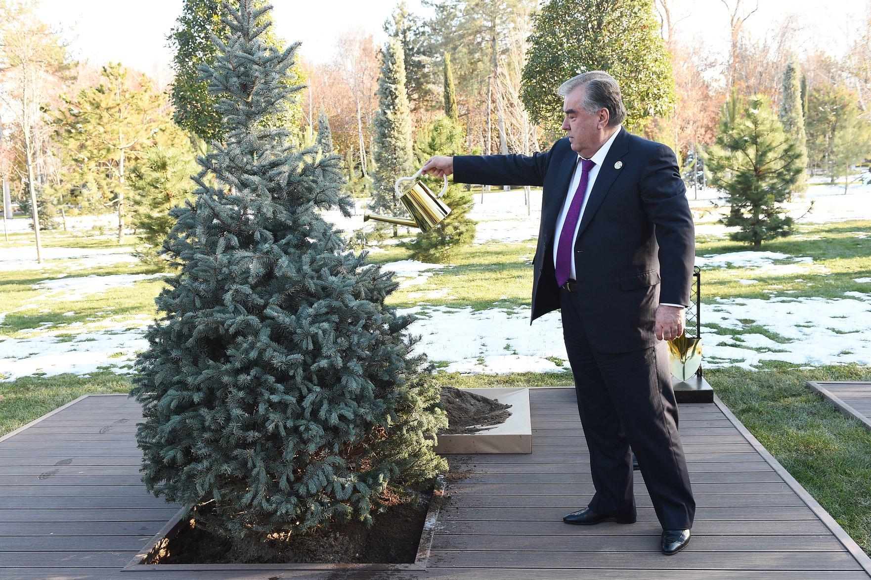 Tadschikistans Präsident Rahmon beim Pflanzen eines der Bäume