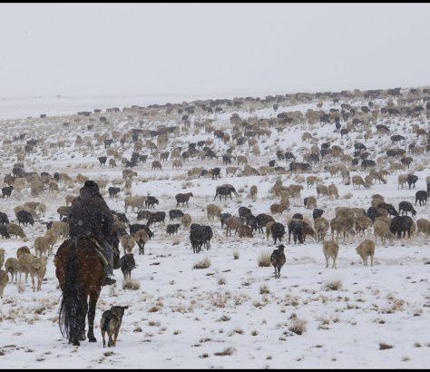 Schnee Kirgistan Steppe Viehzucht