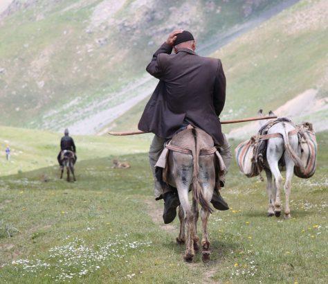 Serafschan Tadschikistan Gebirge Esel