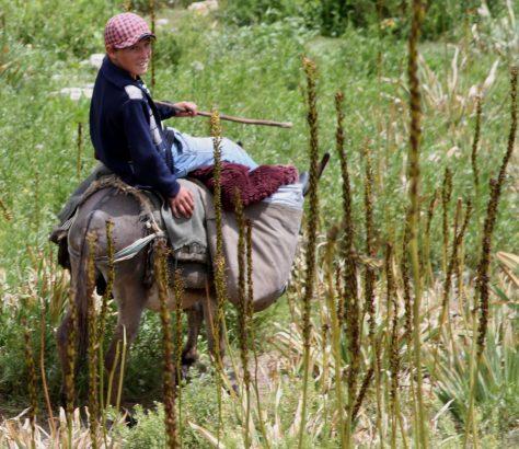 Tadschikistan Serafschan Tal Esel