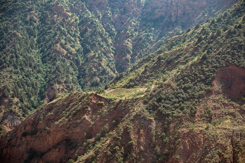 Wälder Tadschikistan Natur