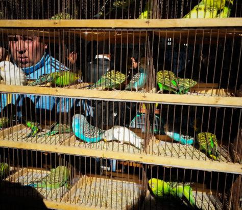 Bild des Tages Usbekistan Taschkent Stanislav Magay Bazar