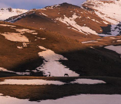 Pferde in den kirgisischen Bergen