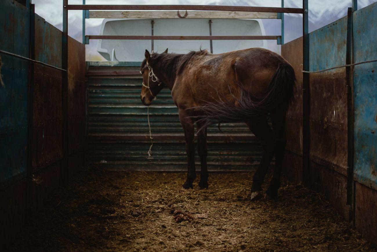 Kirgistan Pferd antoine béguier viehmarktes naryn