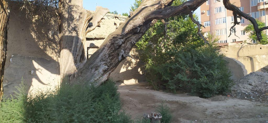Bäume und Ruinen