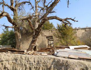 Wacholderbäume und Überreste der Moschee