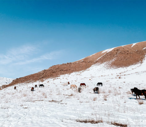 Weide Kirgistan Songköl-See Schnee Pferde