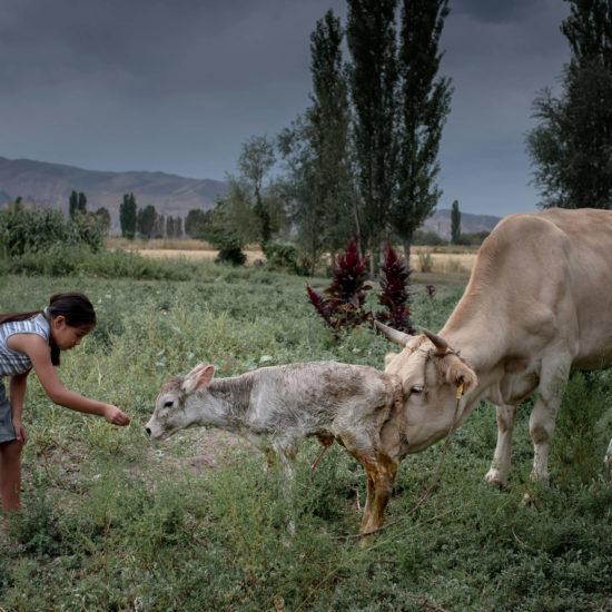 Neugeboren Kalb Kirgistan