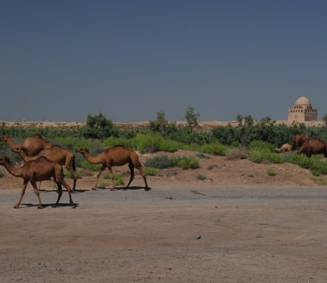 Merv Ruinen Kamele Turkmenistan