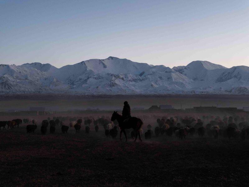 Schafe Sary-Mogol Kirgistan Danil Usmanov