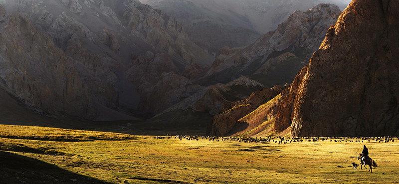 Pferd Herde Steppe Kirgistan