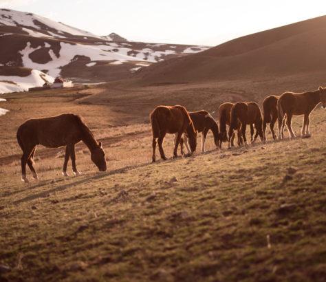 Pferde in der Wildernis kirgistan steppe