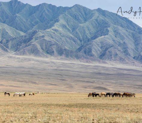 Sharyn-Canyon berg pferd kasachstan almaty
