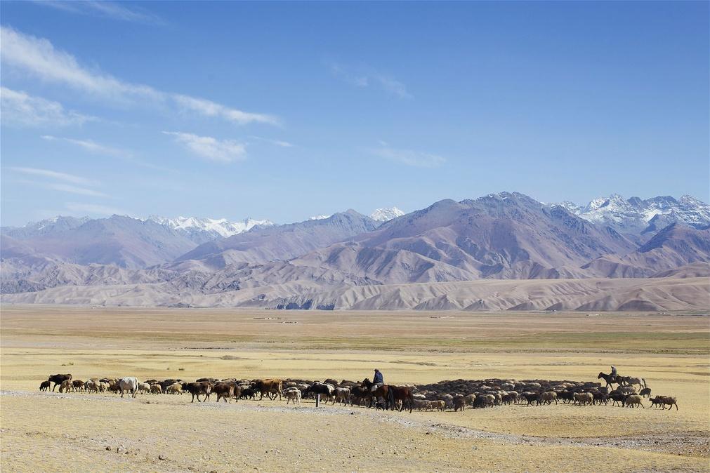 Schafhirte Berge Tal Kirgistan
