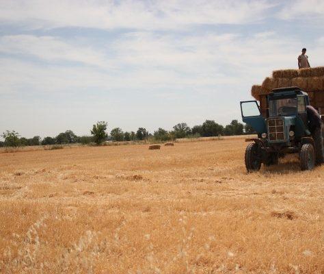 Bauern Feld Kirgistan