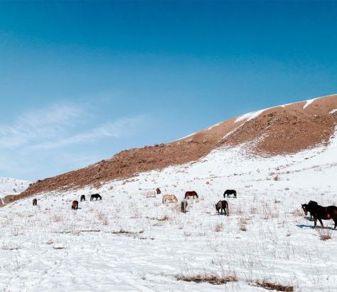 Song-Kul Lake Kyrgyzstan Horses Snow