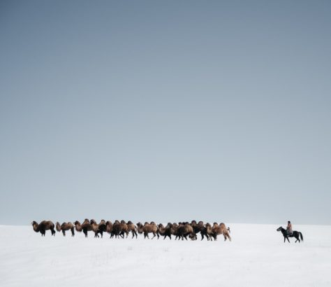 Kyrgyzstan camels shepherd Boirok-Bulak