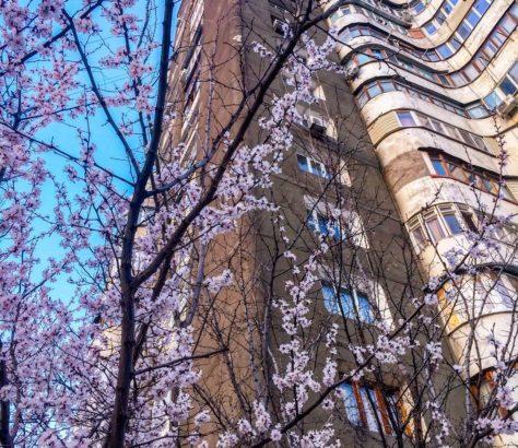 Flowers Bishkek Kyrgyzstan Tree Building Spring