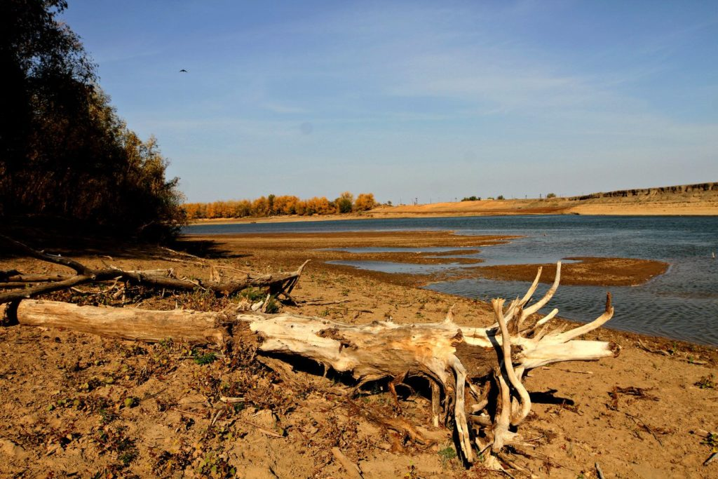 A tree trunk by the Ural river. In the background, the river and the blue sky,