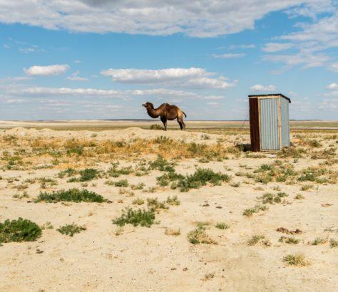 camel Aral sea shore
