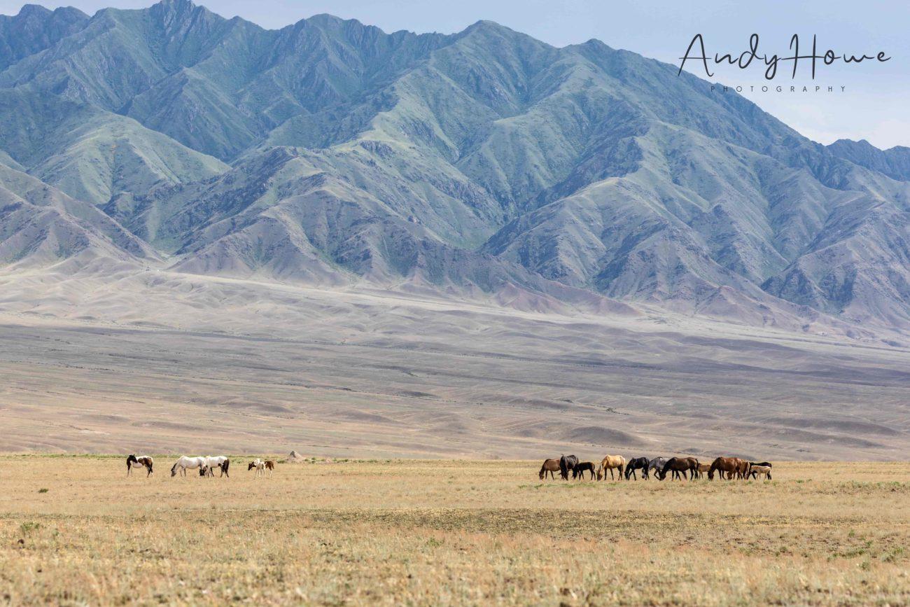 Charyn Canyon kazakhstan almaty horses mountains