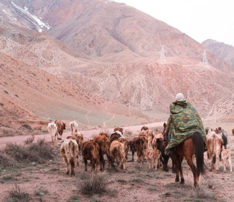 Typical valley shepherd coloured valley Kyzyl-Oi Kyrgyzstan
