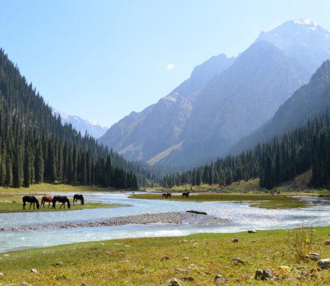Eau Rivière Karakol Kirghizstan Vallée chevaux montagnes